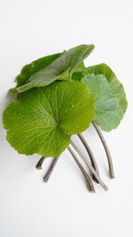 Leaves of wasabi with petioles, adult, large - price per kg