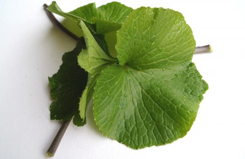 Wasabi leaves with petioles, smaller, (medium) - price per kg